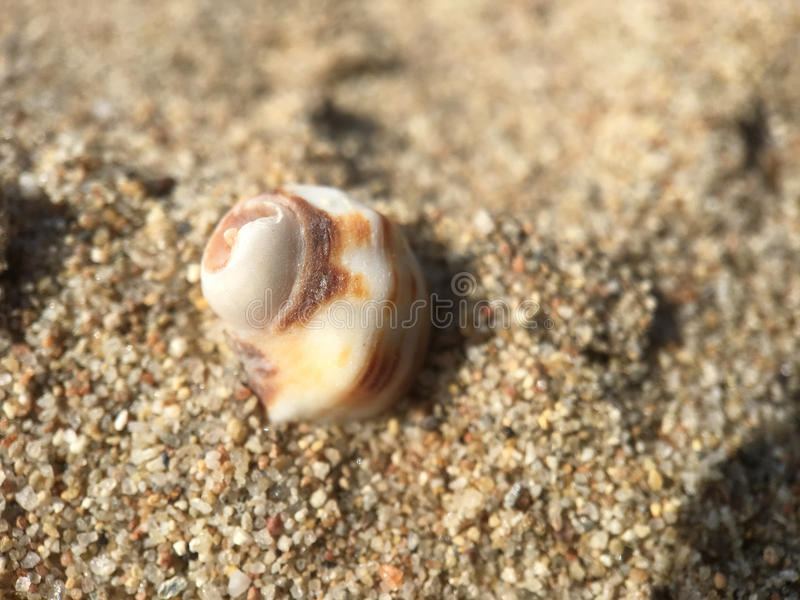Shell at the beach. In Greece stock photo