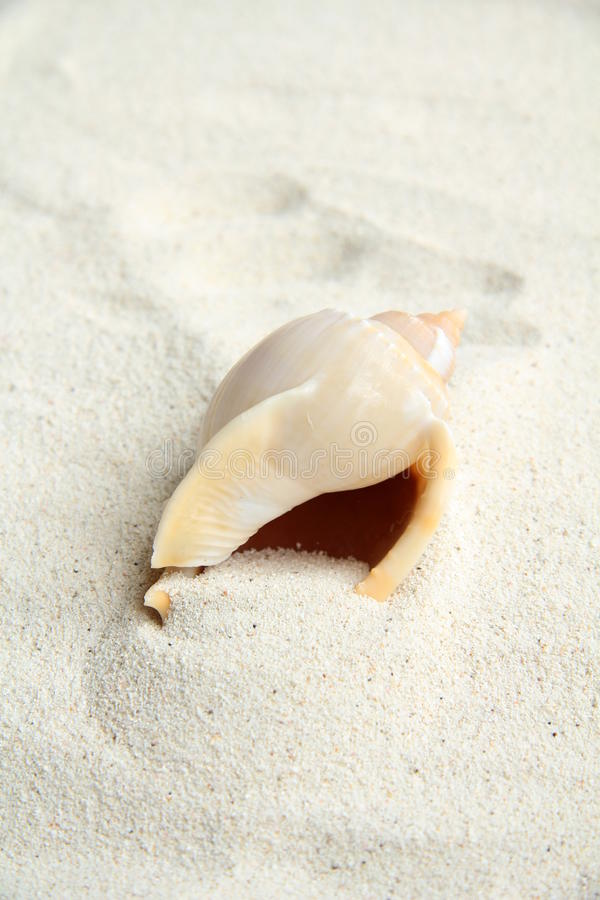 Download Shell on beach sand stock image. Image of text, starfish - 15744417