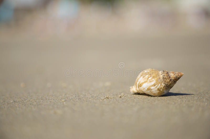 Shell on the beach sand. This is a photo of a Shell laying on a Sunny Sands Beach, Folkestone, UK royalty free stock images