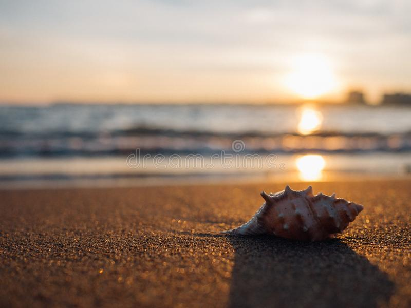 Shell On Beach At Sunset Free Public Domain Cc0 Image