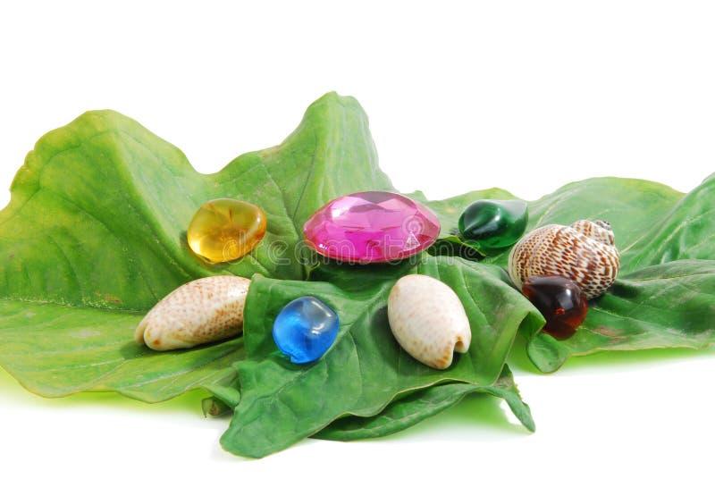 Shell & beads