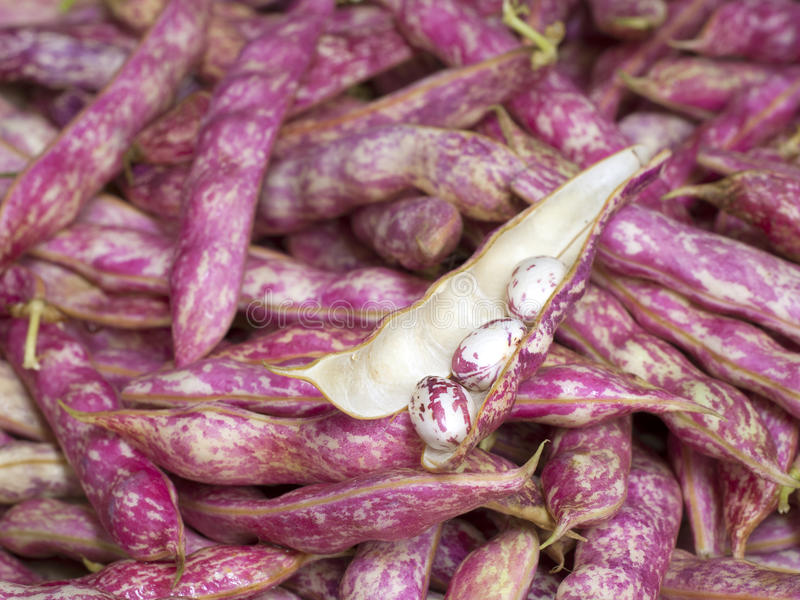 Shell Beans em um escaninho na exposição em um mercado dos fazendeiros imagem de stock
