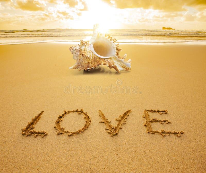 Shell bij een strand royalty-vrije stock foto's