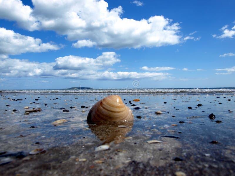 Shell bij strand