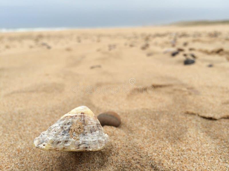 Shell blanc sur une plage sablonneuse photos libres de droits