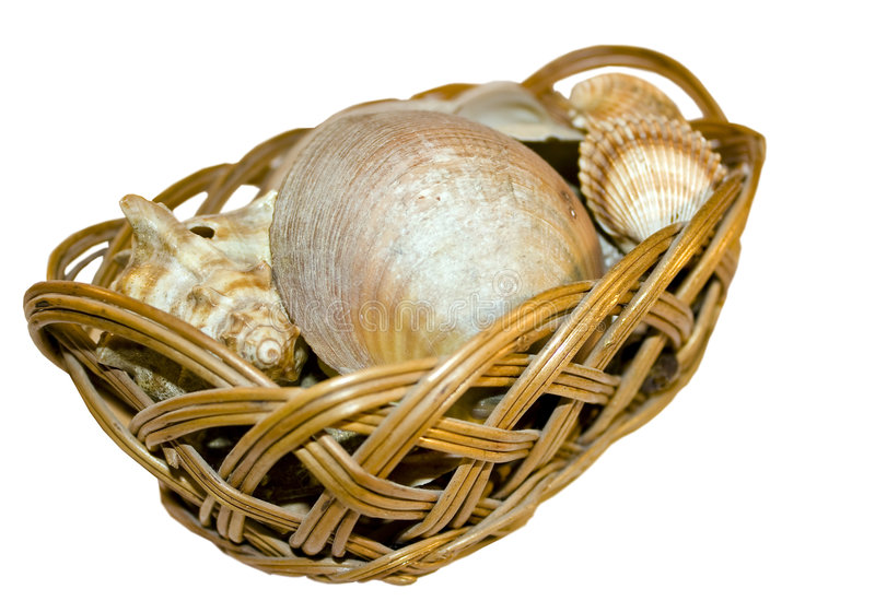 Download Shell Case Royalty Free Stock Photos - Image: 7378148
