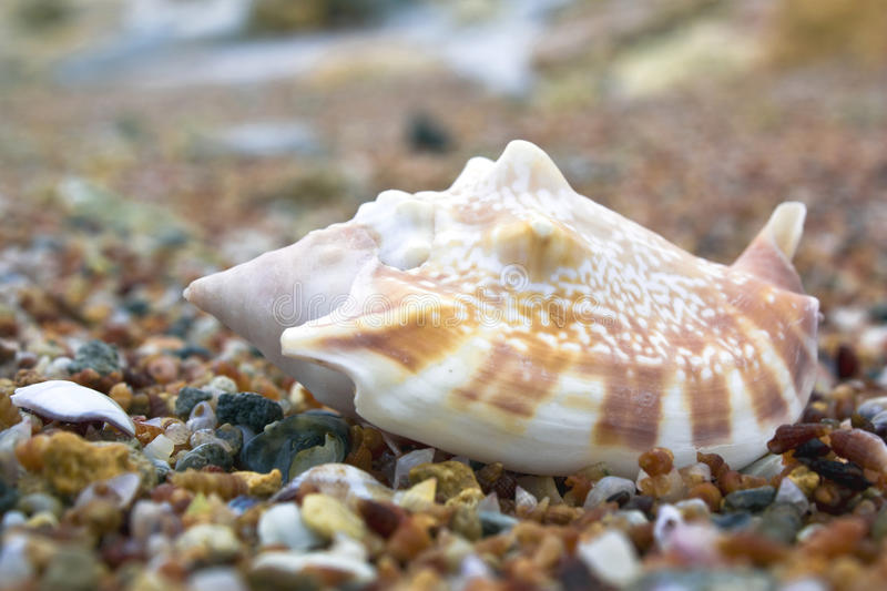 Shell closeup stock photography