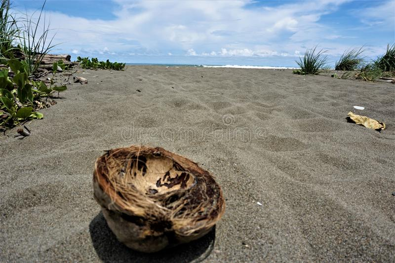 Shell of a coconut at Dominical beach. Costa Rica royalty free stock image