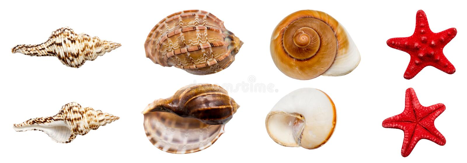 Download Shell Collection stock photo. Image of beautiful, animal - 26117748