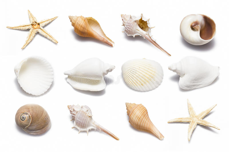 Shell Collection royalty-vrije stock fotografie