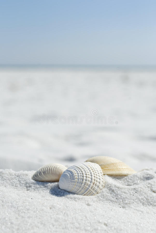 Free Shell Collection Among The White Sand Stock Image - 18955271