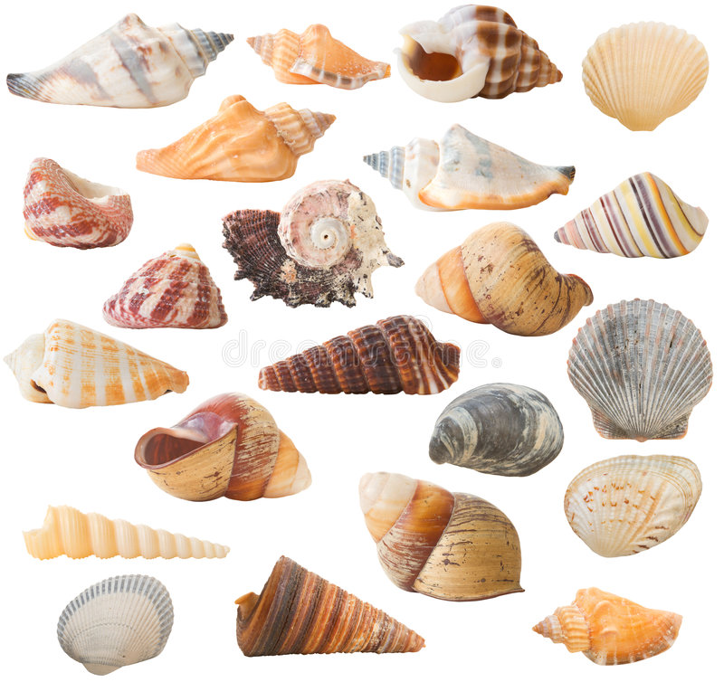 Free Shell Collection, Isolated Royalty Free Stock Photography - 3359727