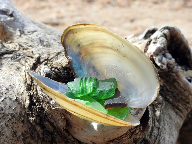 Shell and colorful glass pick near Curonian spit, Lithuania stock photography