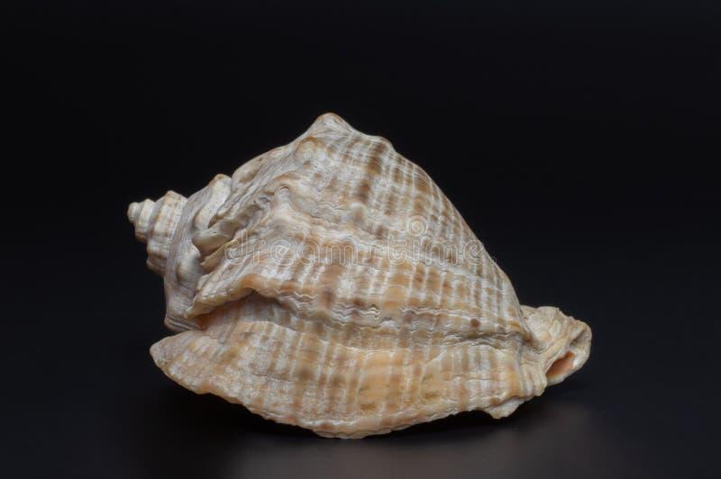 Shell immagine stock