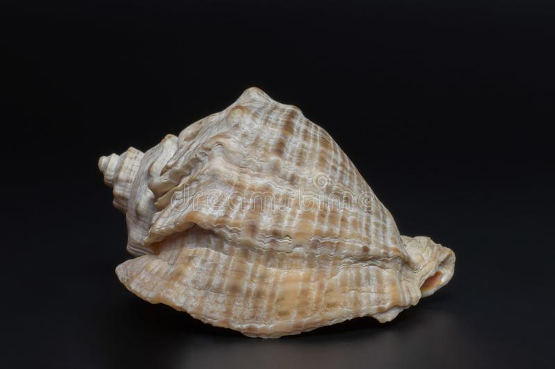 Shell image stock
