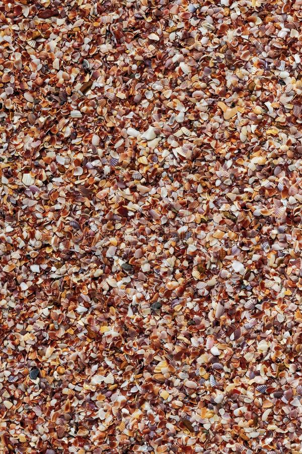 Shell crushed background pattern composed of mollusks brown marine tropical vertical base stock photos