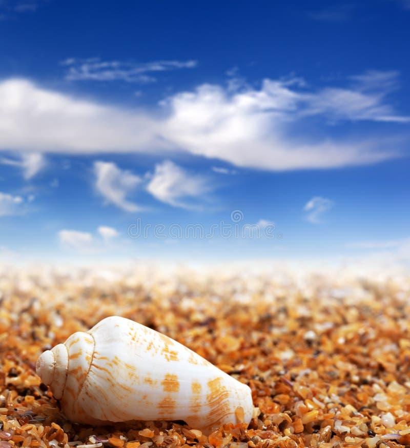 Shell d'escargot de cône sur le sable échouent photographie stock libre de droits