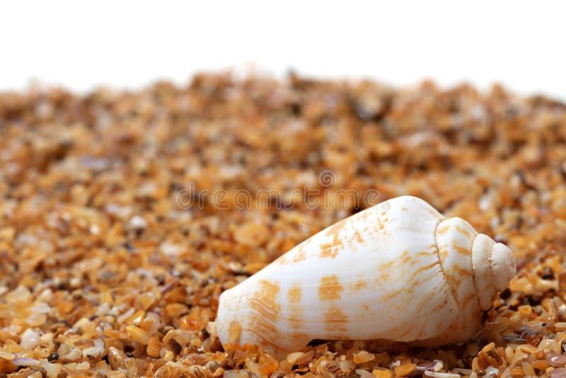 Shell d'escargot de cône sur le sable photos stock