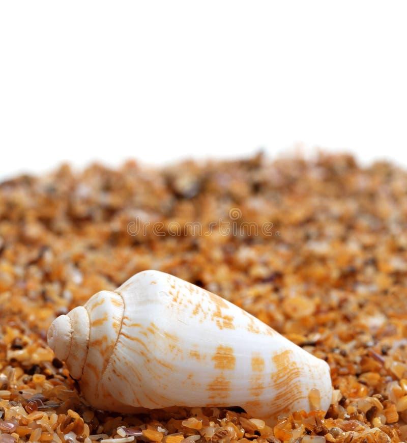 Download Shell D'escargot De Cône Sur Le Sable Photo stock - Image du océan, aquarium: 87700608