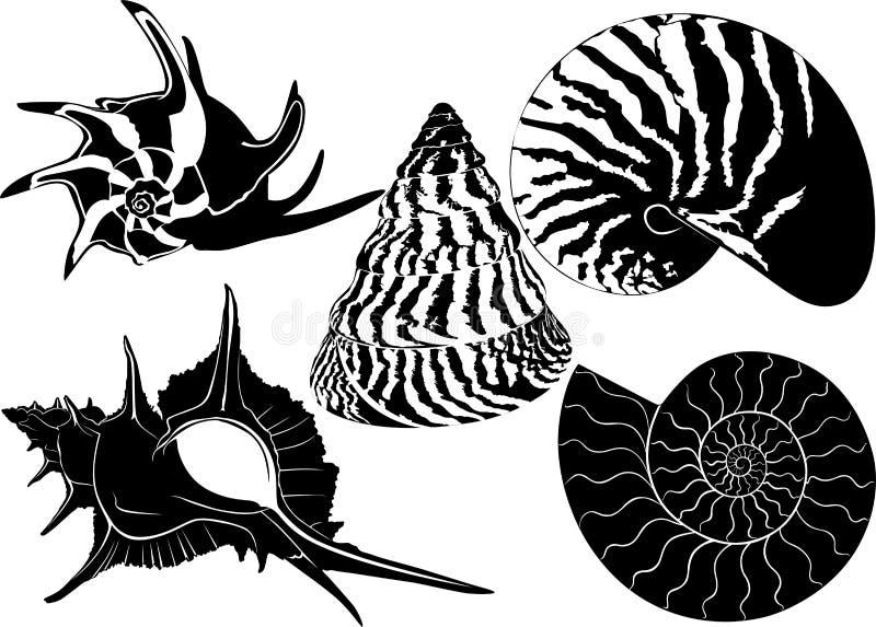 Shell d'un escargot illustration stock