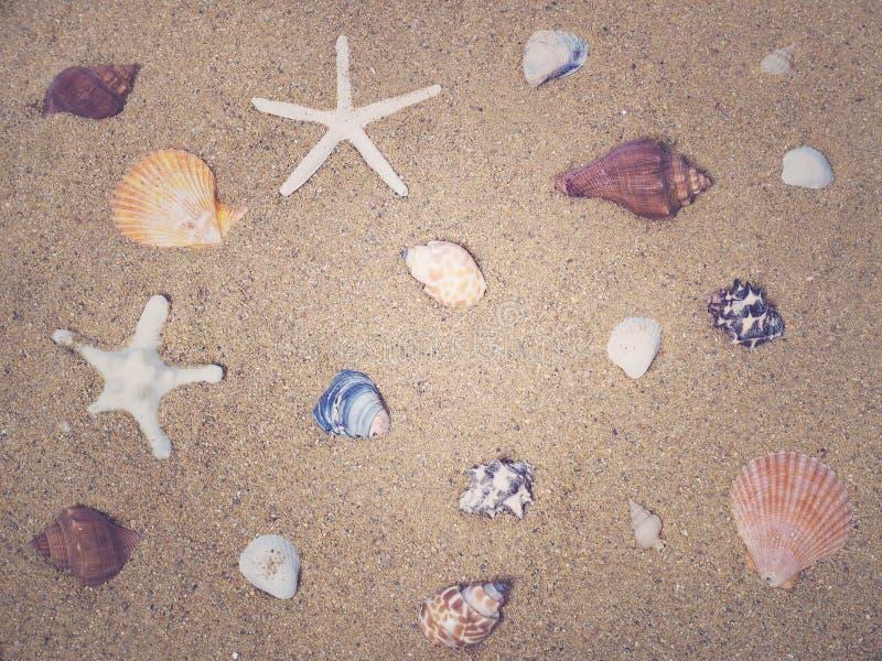 Shell da estrela do mar e do mar na areia foto de stock royalty free