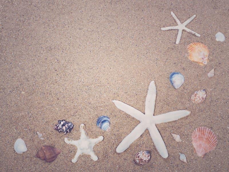 Shell da estrela do mar e do mar na areia foto de stock
