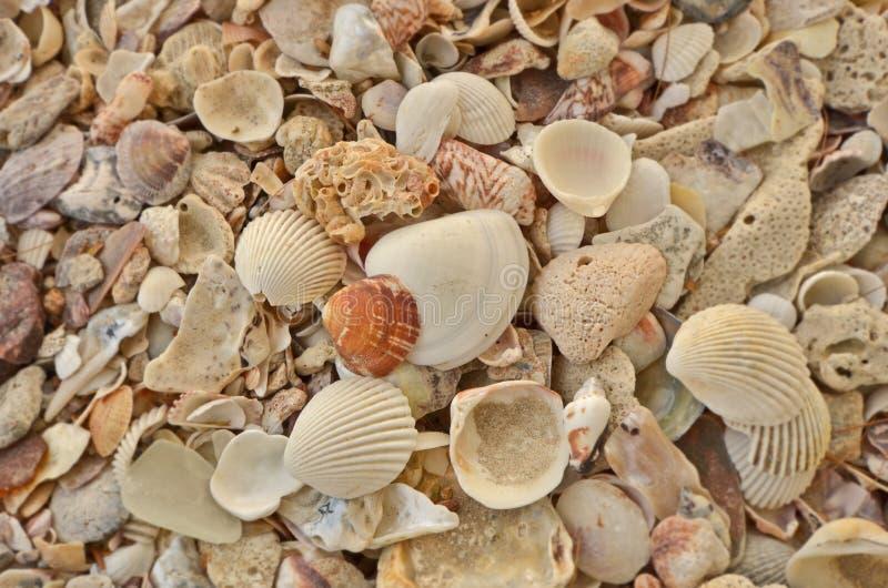 Shell da natureza da opinião superior do marisco imagens de stock