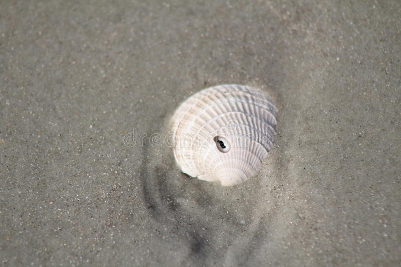 Shell da praia de Florida imagem de stock