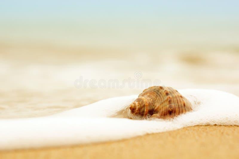 Shell dans l'eau sur la plage photographie stock libre de droits