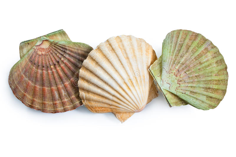 Shell de conchas de peregrino fotos de archivo libres de regalías