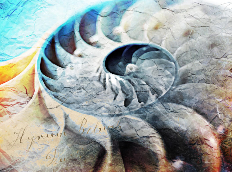 Shell de Fibonacci, pintura digital da relação dourada fotografia de stock