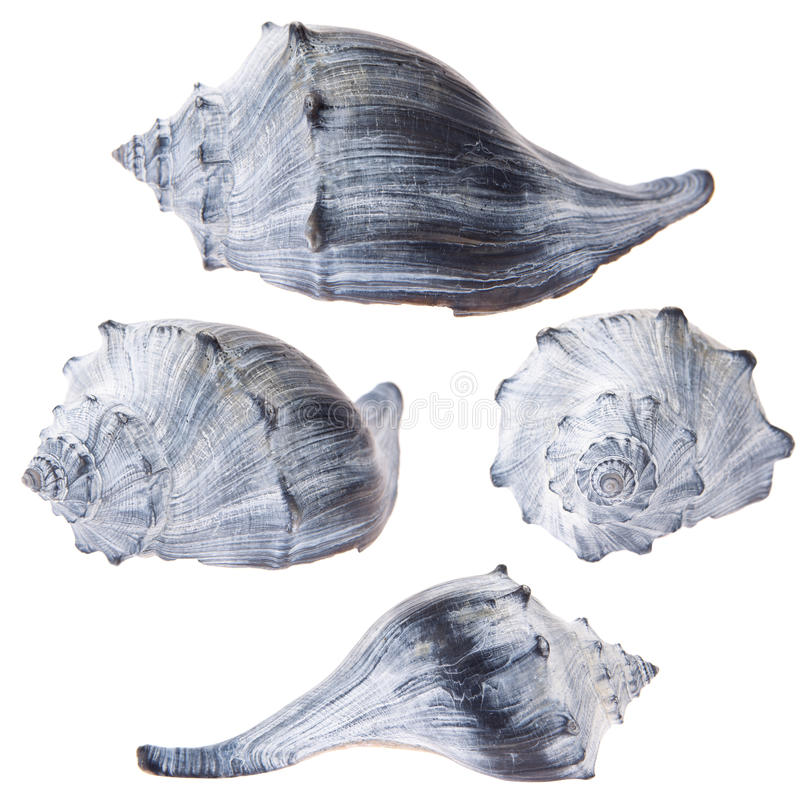 Shell de la concha fotos de archivo