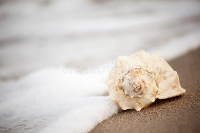 Shell de la concha en la playa fotografía de archivo