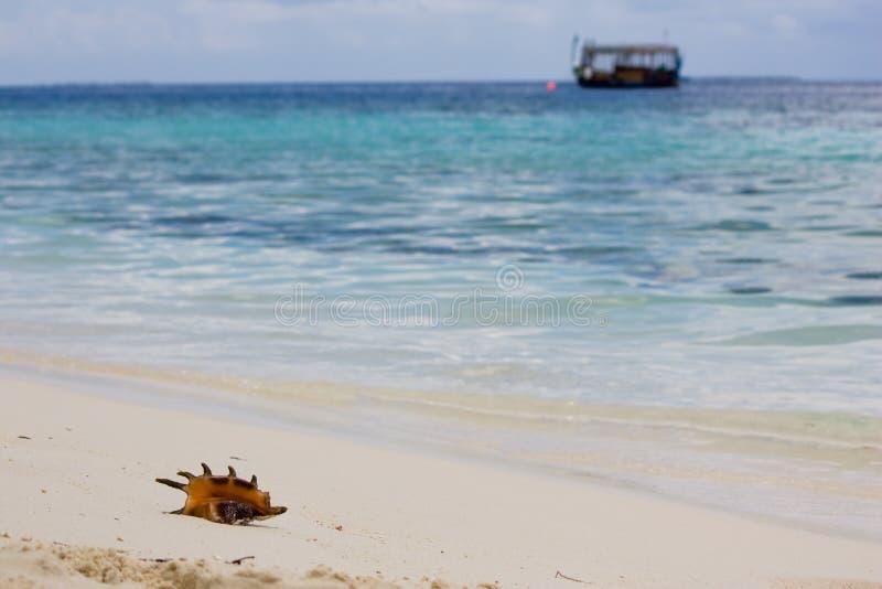Shell, de oceaan en de boot van de kroonslak stock foto