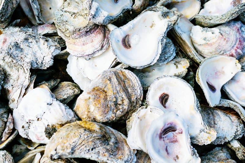 Shell de ostra de Louisiana fotografia de stock royalty free