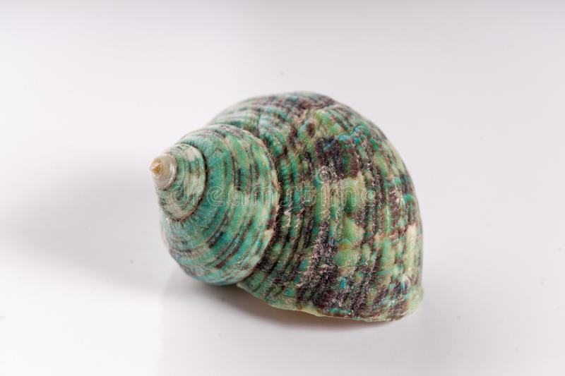 Shell de um caracol de mar foto de stock royalty free