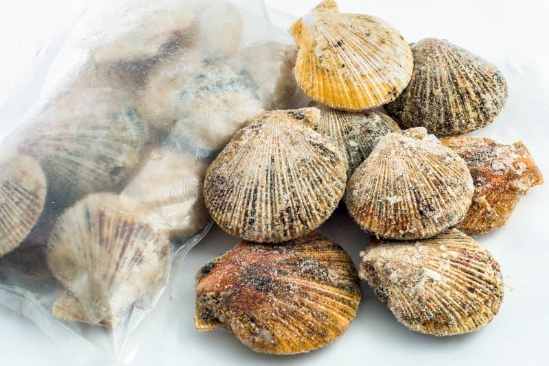 Shell de vieira congelados foto de stock