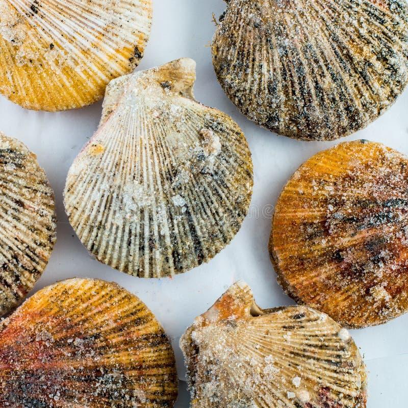 Shell de vieira congelados fotografia de stock royalty free