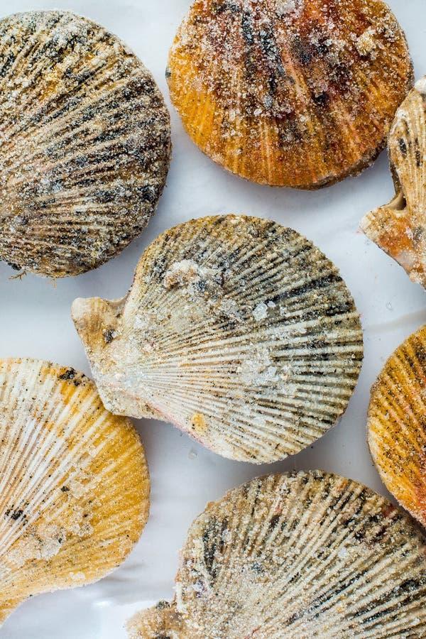 Shell de vieira congelados fotos de stock