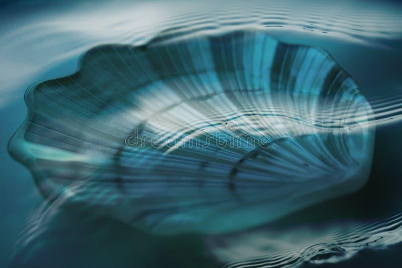 Shell debajo del agua imágenes de archivo libres de regalías
