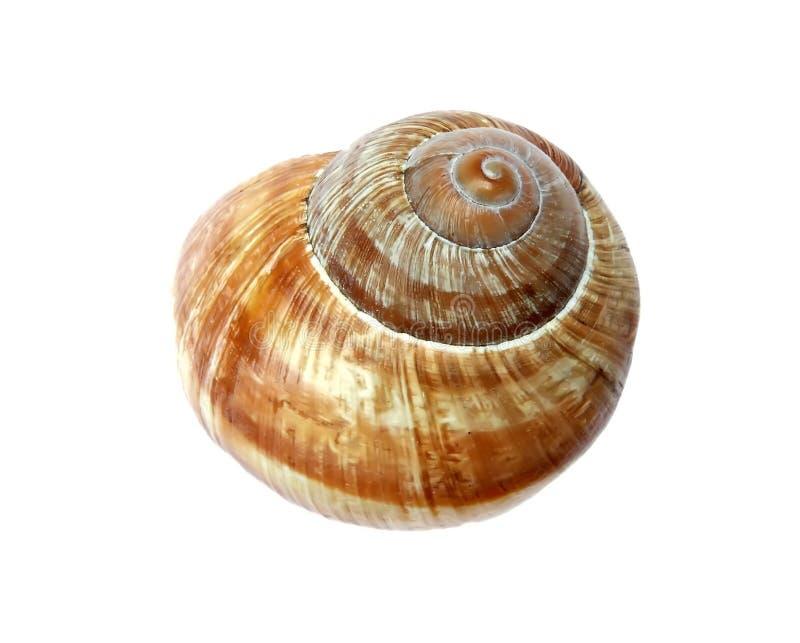 Shell del caracol imagenes de archivo