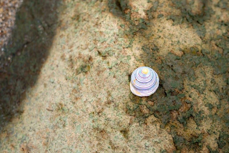 Shell del caracol fotos de archivo libres de regalías