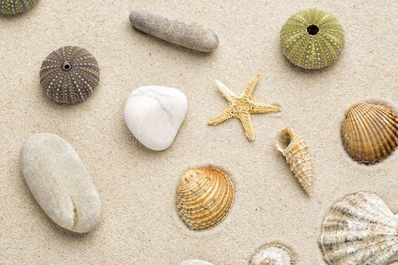 Shell del mar fotos de archivo