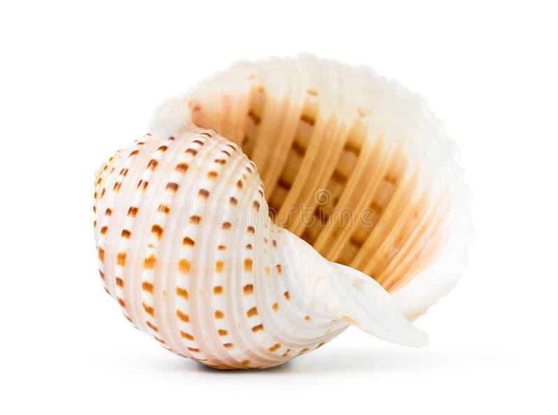 Download Shell del mar imagen de archivo. Imagen de animal, oceánico - 41903039