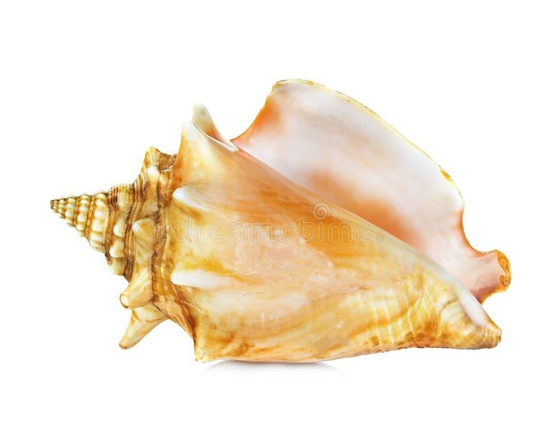 Shell del mar aislado en blanco imagen de archivo