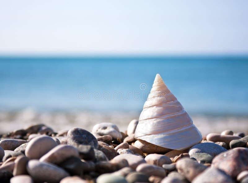 Shell del mar con el mar y el cielo azul imágenes de archivo libres de regalías