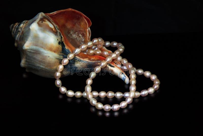 Shell del mar El color de rosa aljofara el collar Fondo negro imágenes de archivo libres de regalías