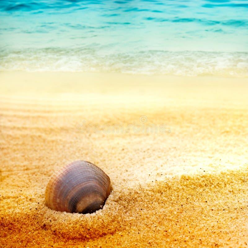 Shell del mar en la arena fina fotografía de archivo