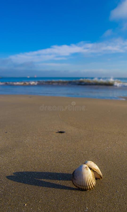 Shell del mar en la playa imagen de archivo