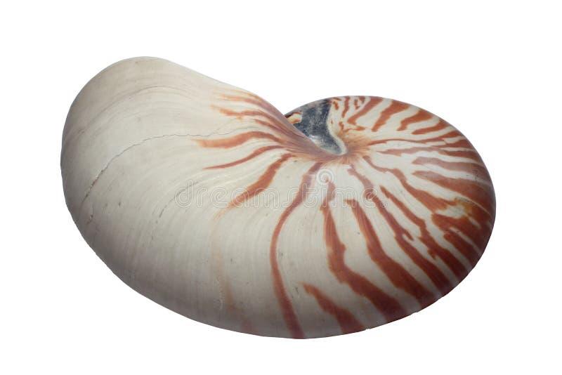 Shell del nautilus foto de archivo